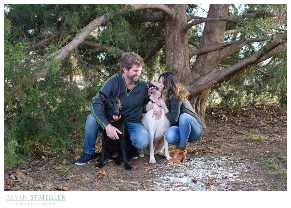 Post wedding portraits with dogs