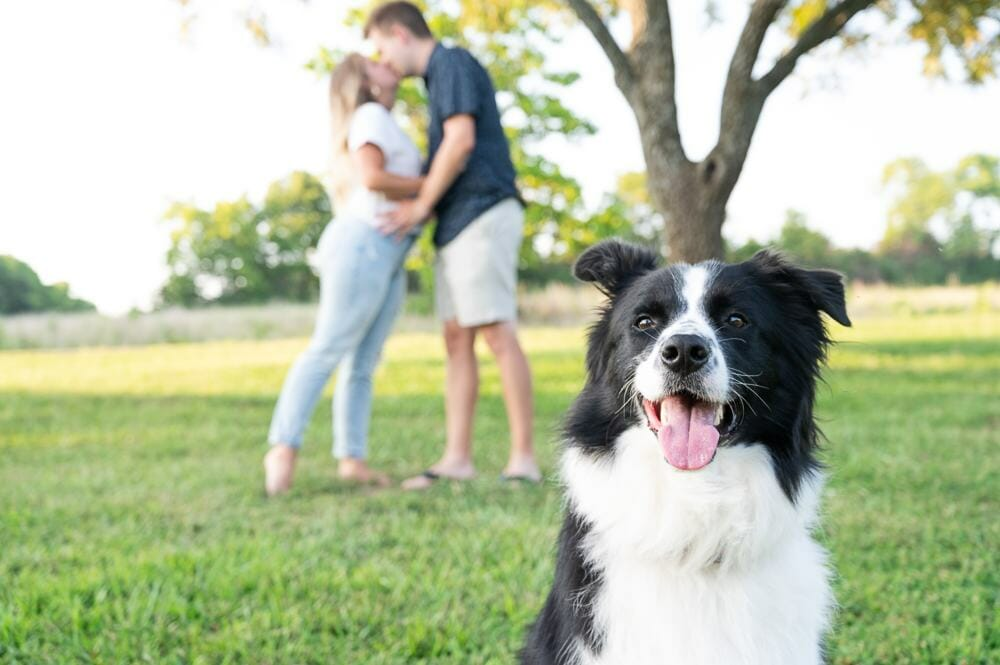 dog in foreground of engagement photo